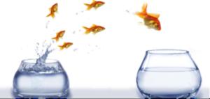 netwerkperspectief jump vissen